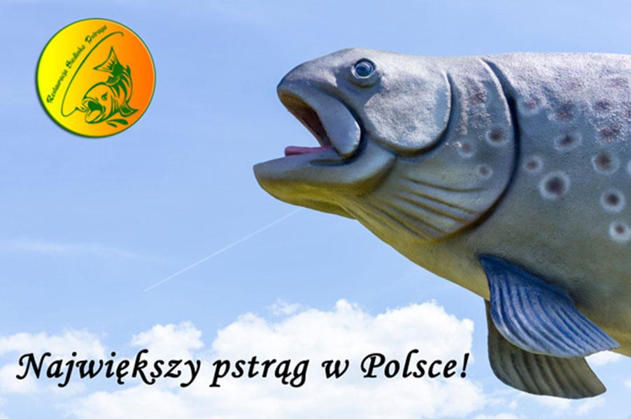 ryby w stawie randki online